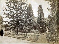 39a-TreesComp.jpg