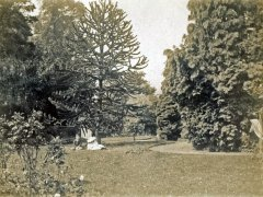 39b-Trees--CoupleComp.jpg